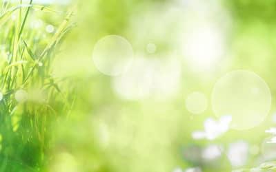Das grüne Lebenselixier